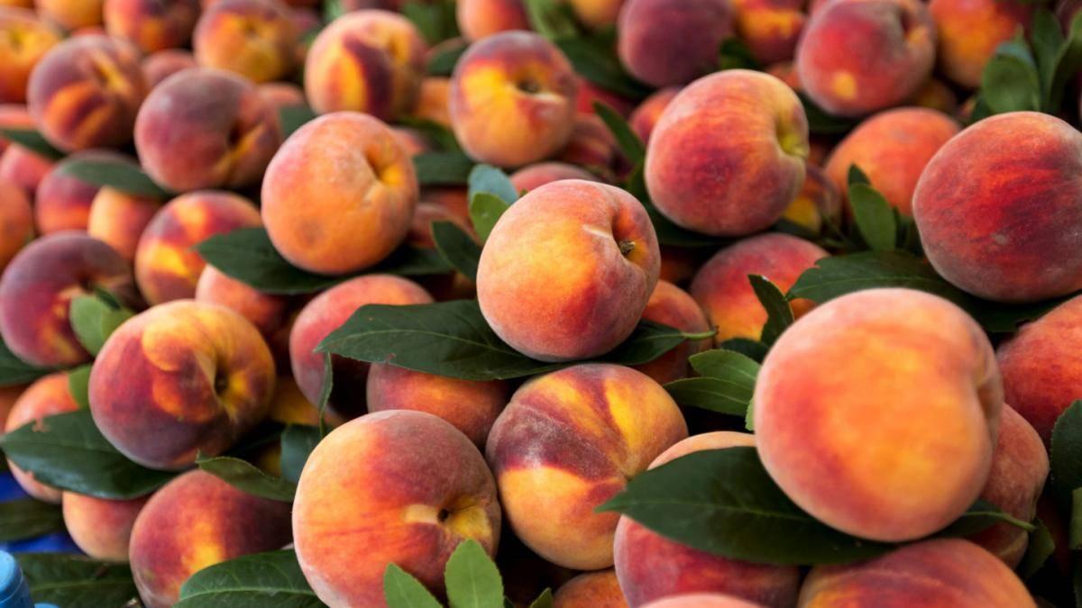 Персики польза и вред для здоровья
