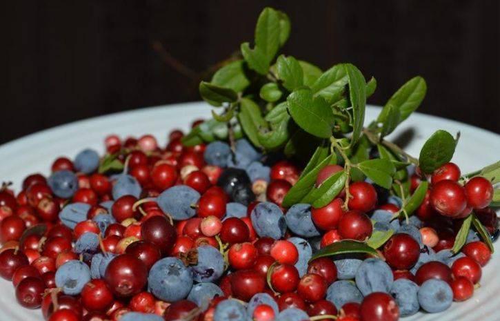 Какие ягоды полезны для почек