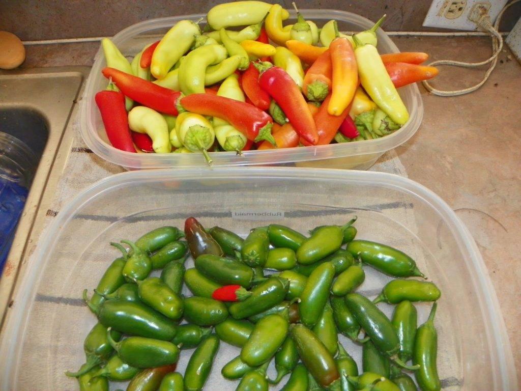Как сушить перец болгарский в электросушилке: пошаговая инструкция по заготовке овоща