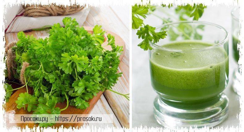 Польза петрушки, ее семян, стеблей и сока, возможный вред для здоровья