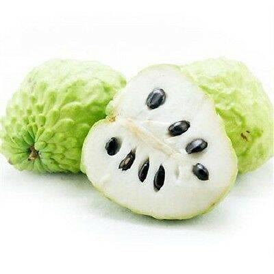 Гуанабана - полезные свойства фрукта