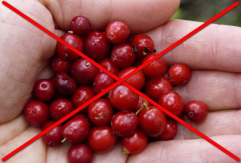 Топ-7 наиболее полезных ягод на планете