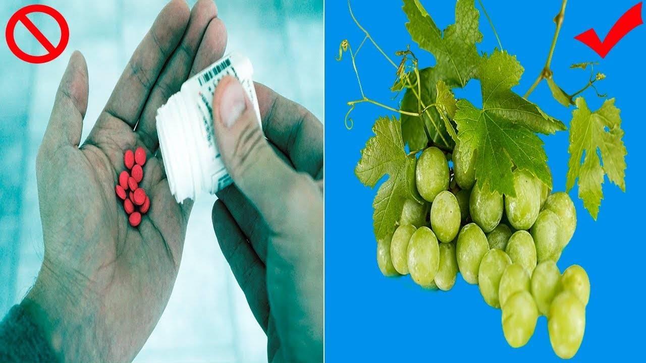Польза и вред винограда для организма человека, применение в народных рецептах