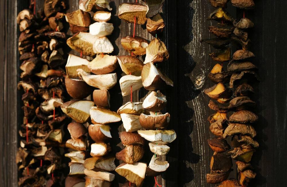 Как сушить грибы? какие грибы сушат? сушка грибов в домашних условиях