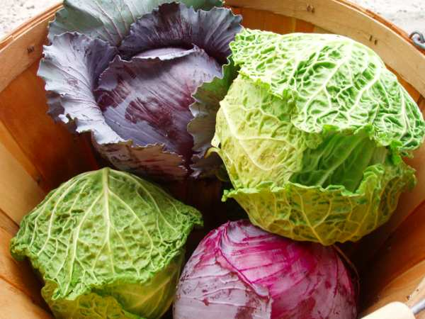 9 фактов о пользе и вреде квашеной капусты для организма человека