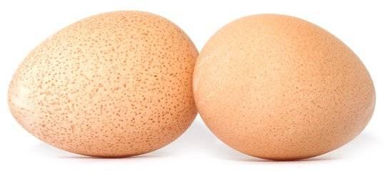 Яйца цесарки: описание, как выглядят, польза и вред