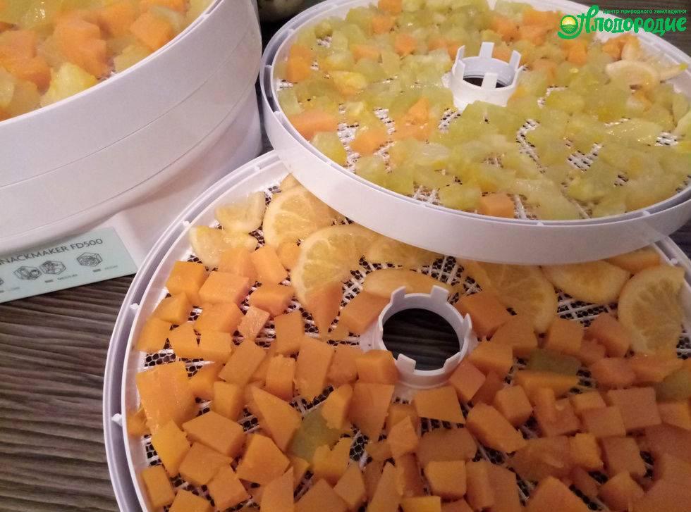 Как посушить тыкву в домашних условиях. вкусная и полезная сушеная тыква кусочками – рецепт приготовления с пошаговыми фото в электросушилке на зиму. выбор тыквы для поделок