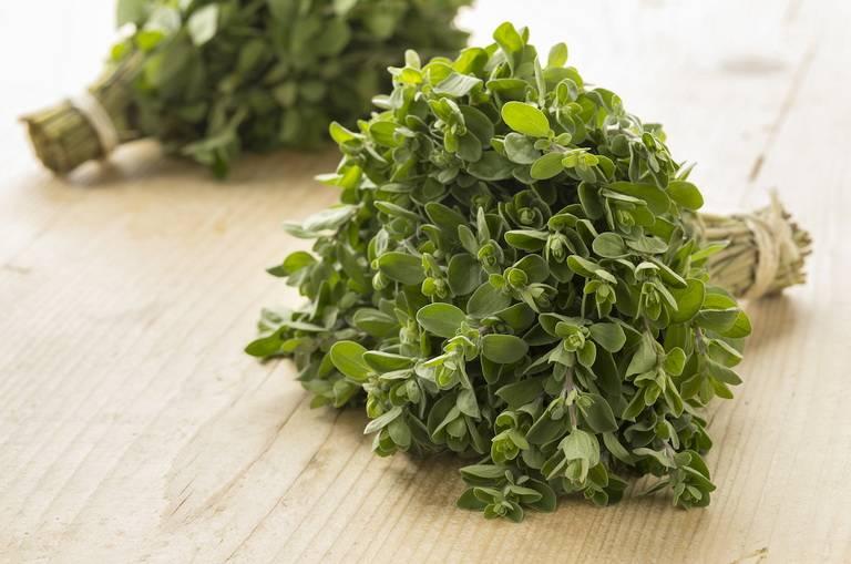 Целебное растение или кулинарная добавка? полезные свойства майорана и противопоказания к применению