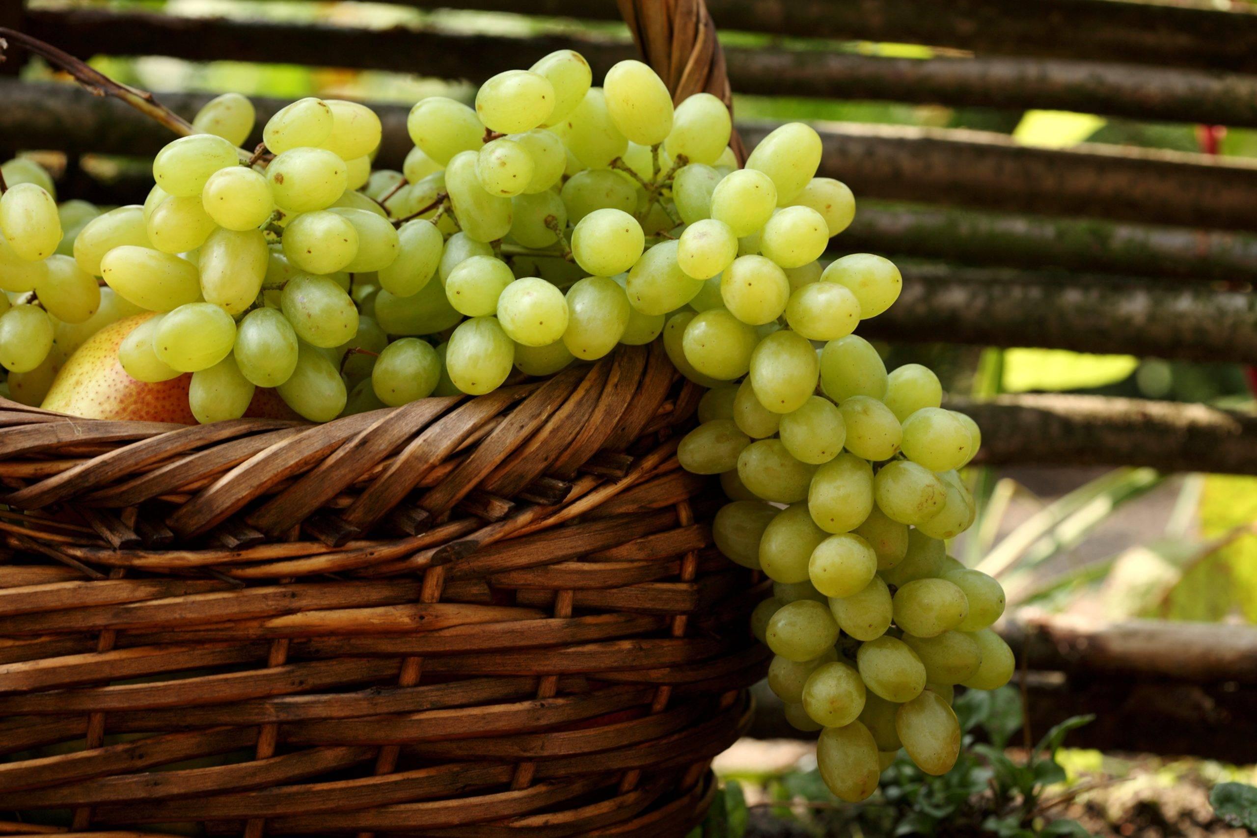 Виноградные листья для долмы на зиму — пошаговые рецепты с фото