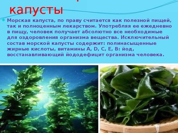 """""""польза морской капусты — давайте разбираться!"""""""