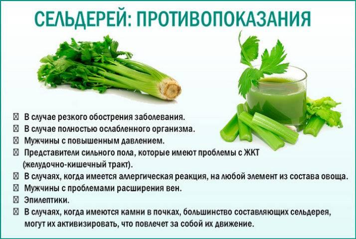 Польза и вред сельдерея для здоровья