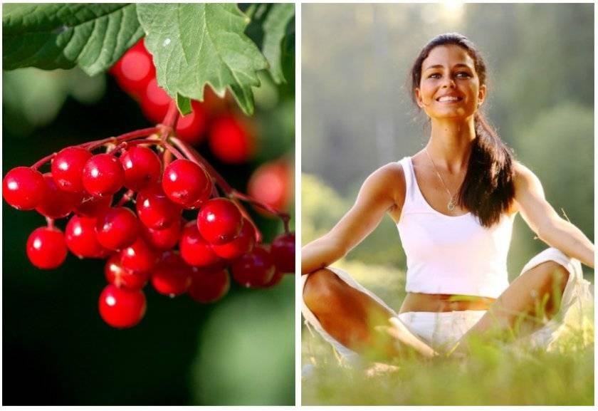 Калина красная: полезные свойства и целебные рецепты