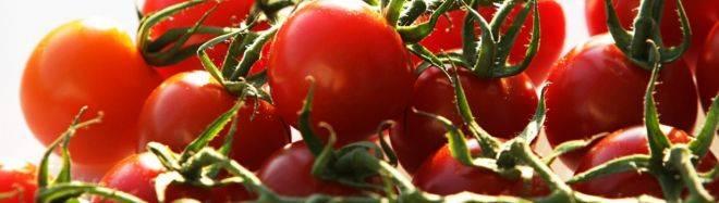 Чем полезны помидоры для человека – 10 доказанных свойств