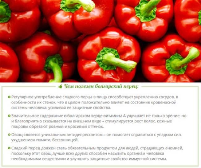 Польза и вред болгарского перца для здоровья организма