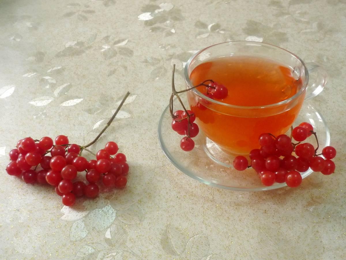 Чай с калиной — польза и вред для здоровья
