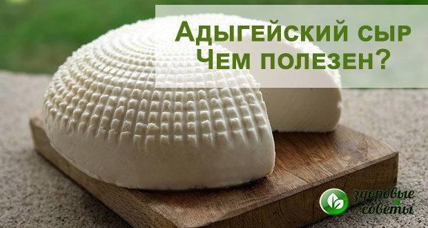 Польза адыгейского сыра – состав, полезные свойства и калорийность