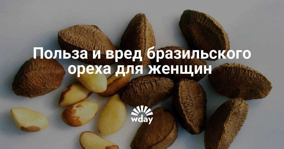 Бразильский орех — полезные свойства и противопоказания