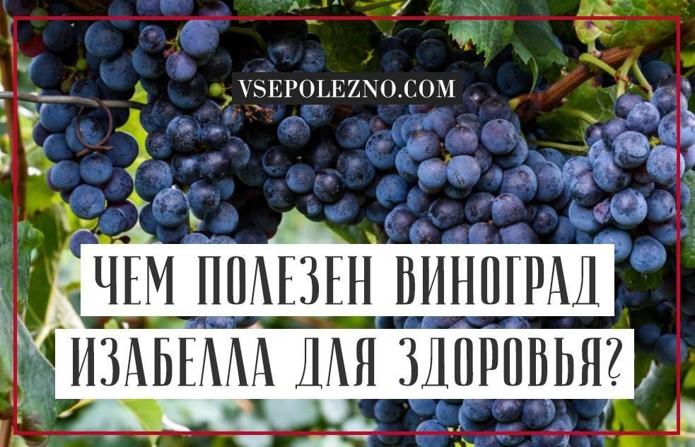 Полезные свойства белого винограда для организма человека