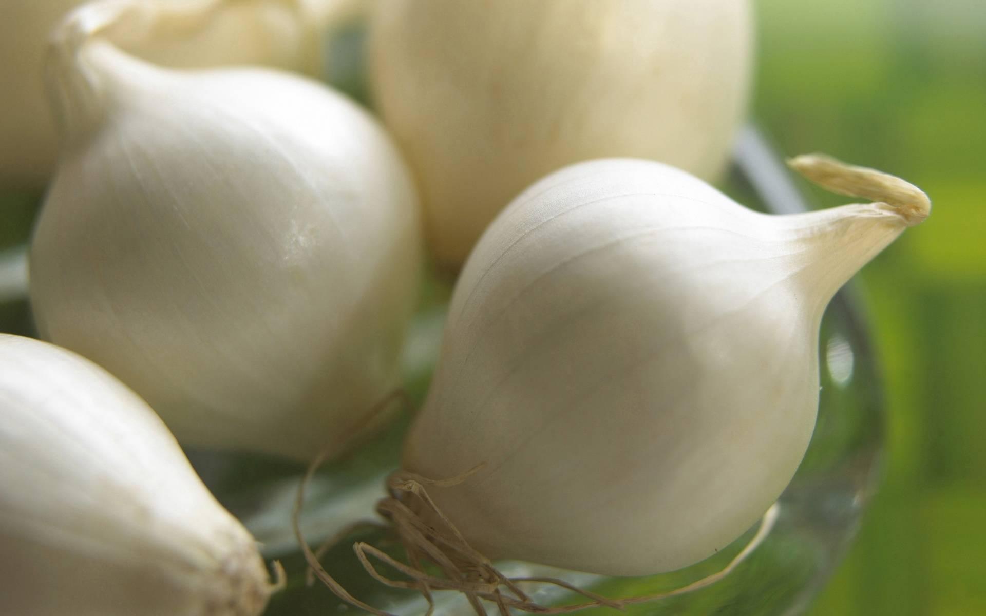 Репчатый лук: польза и вред для организма