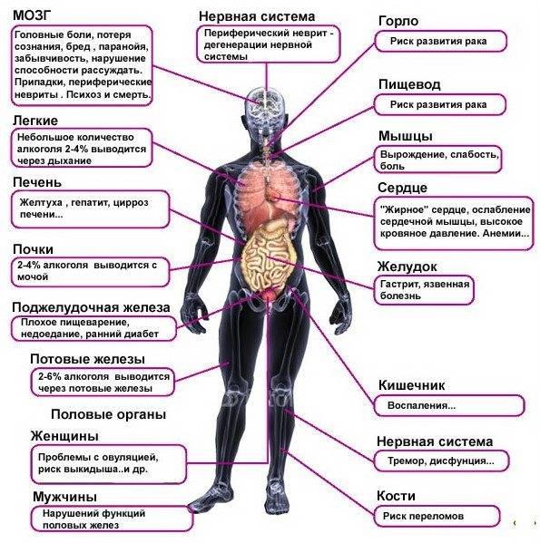 Красное вино: польза и вред для организма человека