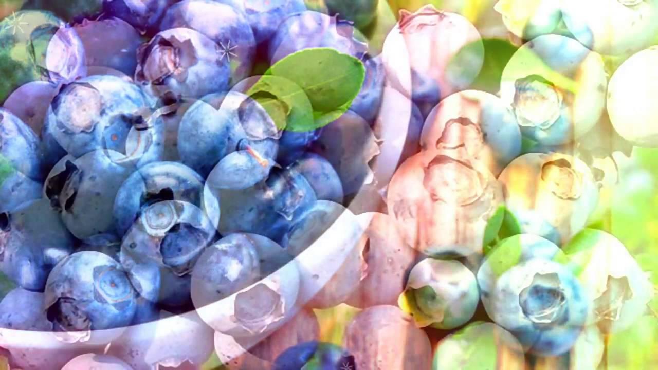 Голубика польза и вред для здоровья