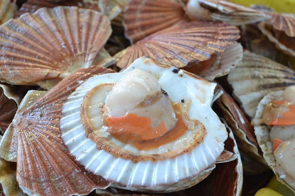 Польза и вред морских гребешков, пищевая ценность, химический состав