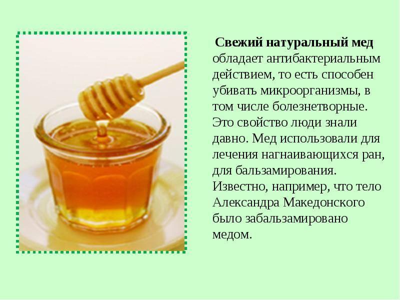Чем полезен мед для организма человека