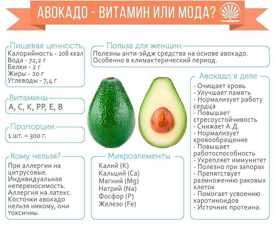 Авокадо – польза и вред для организма, калорийность