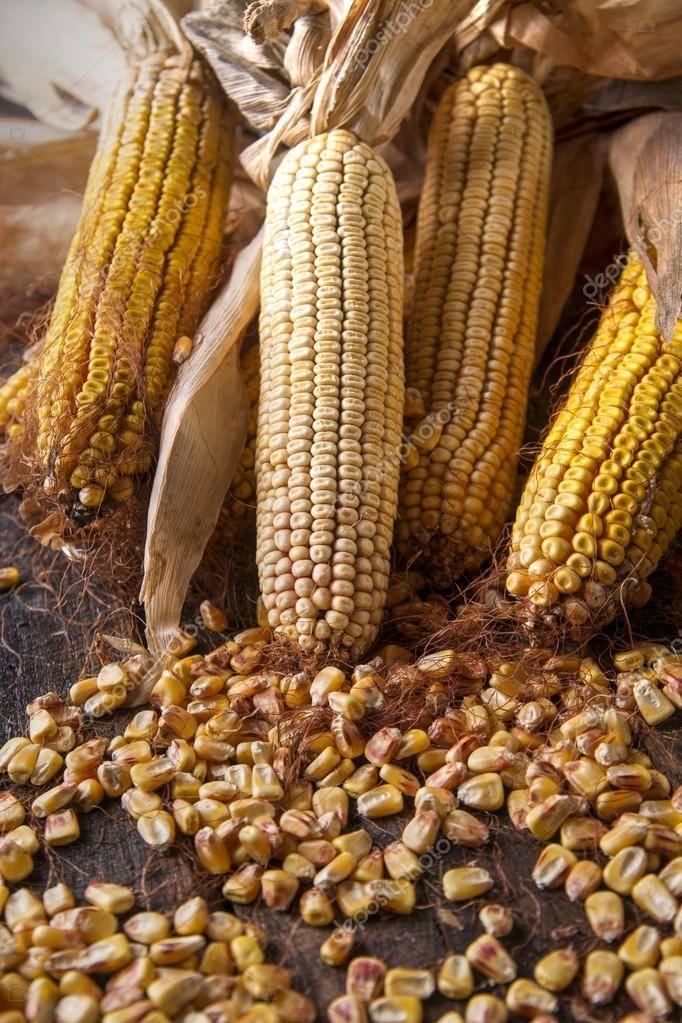 Ферментированная кукуруза для рыбалки