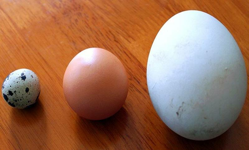 Польза и вред для организма человека от гусиных яиц, рецепт маски