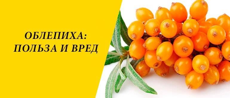 Рецепты и способы применения облепихового масла для лучшего проявления его лечебных свойств
