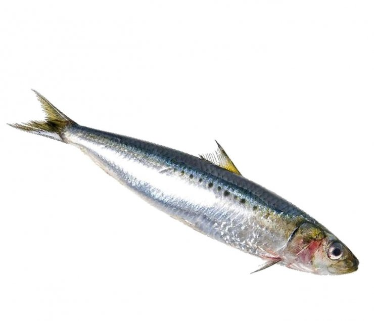 Какая рыба полезнее и лучше сайра или сардина