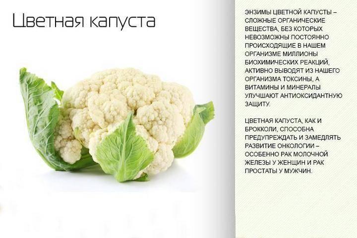 Цветная капуста, польза и вред для здоровья человека