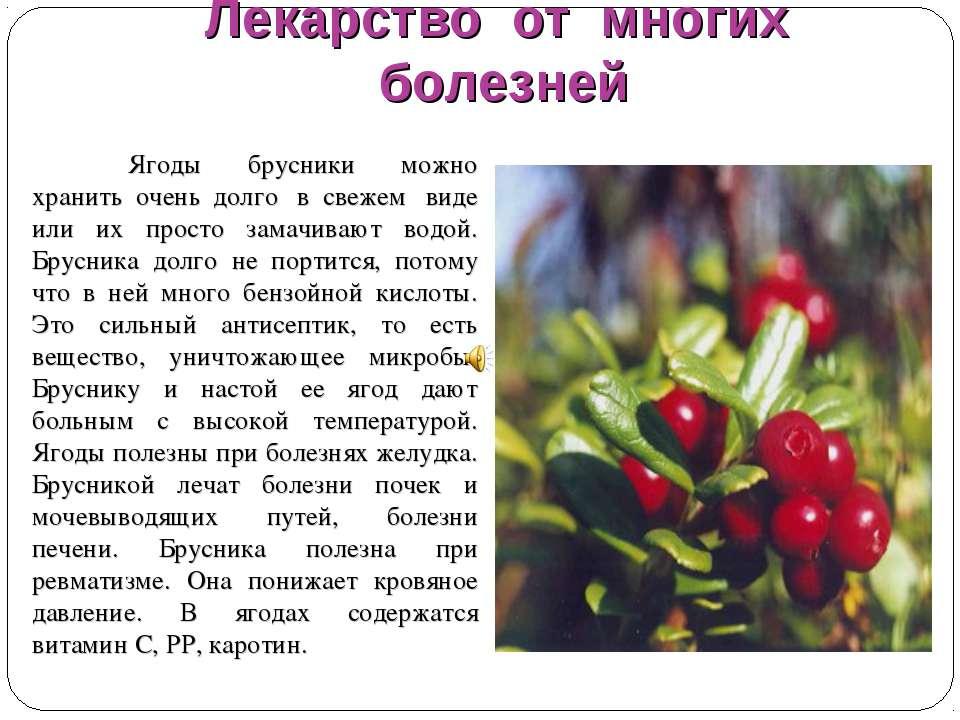 Трава костяника что лечит. костяника — полезные свойства и противопоказания
