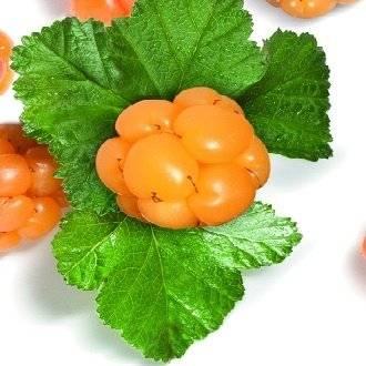 Свойства ягоды морошка, польза и противопоказания, рецепты