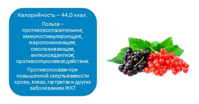 Черная смородина польза и вред для здоровья организма человека