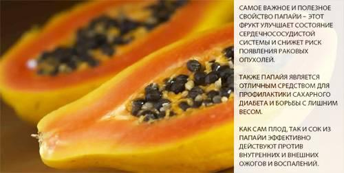 Папайя: польза и вред для организма женщин и мужчин, свежих фруктов и сушёных цукатов, отзывы