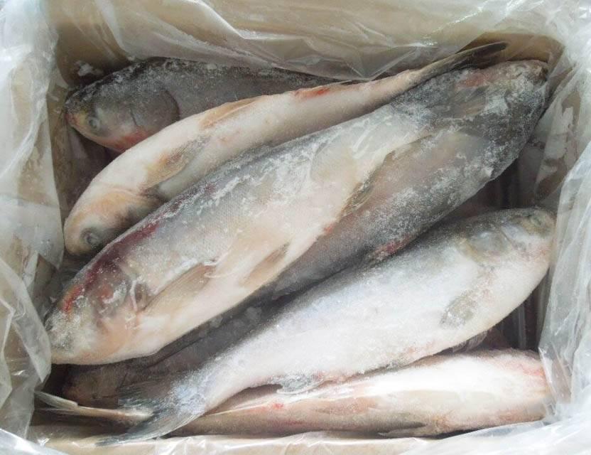Рыба толстолобик. калорийность и состав толстолобика
