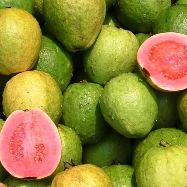Фрукт гуава — полезные свойства и вред для организма