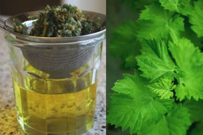 Виноградные листья – польза и вкус