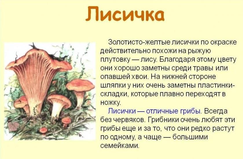 Как приготовить грибы лисички (3 рецепта)