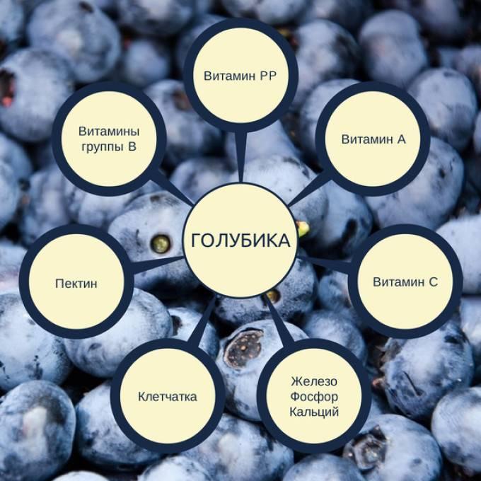 Голубика: польза и вред для здоровья, калорийность, состав