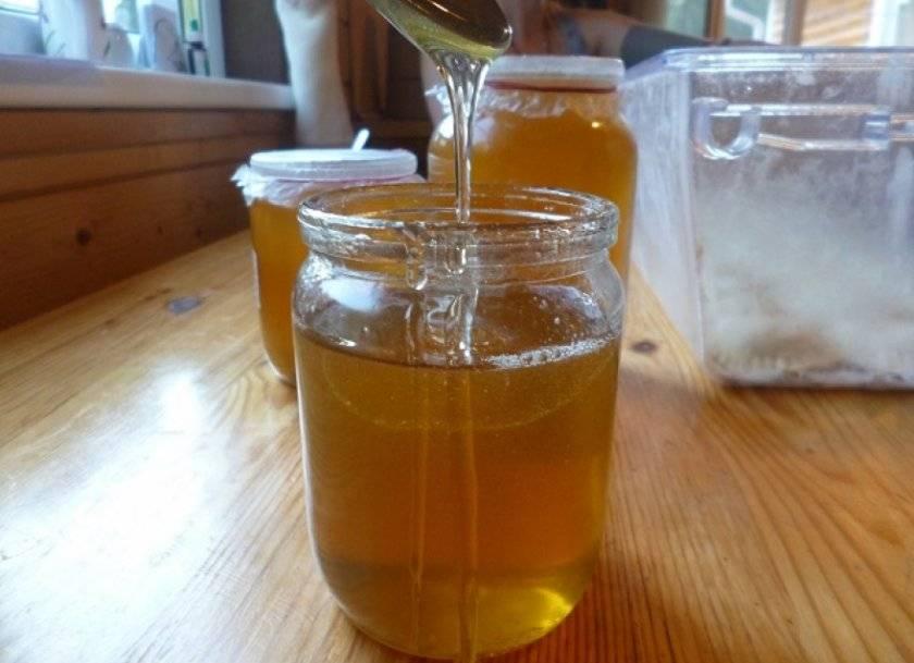 Польза и рецепты соснового меда