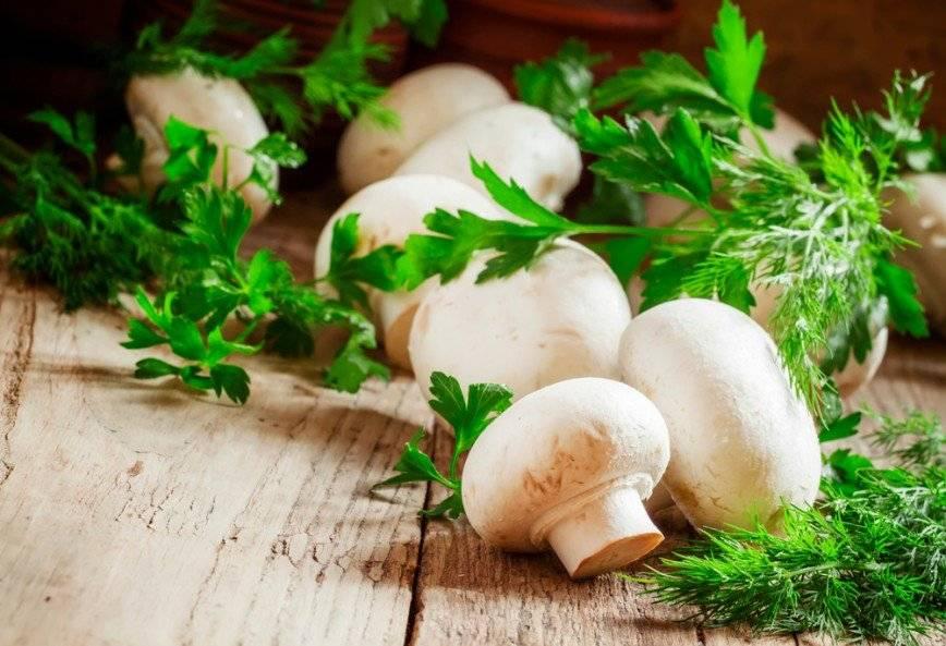 Шампиньоны: состав, полезные свойства и вред грибов