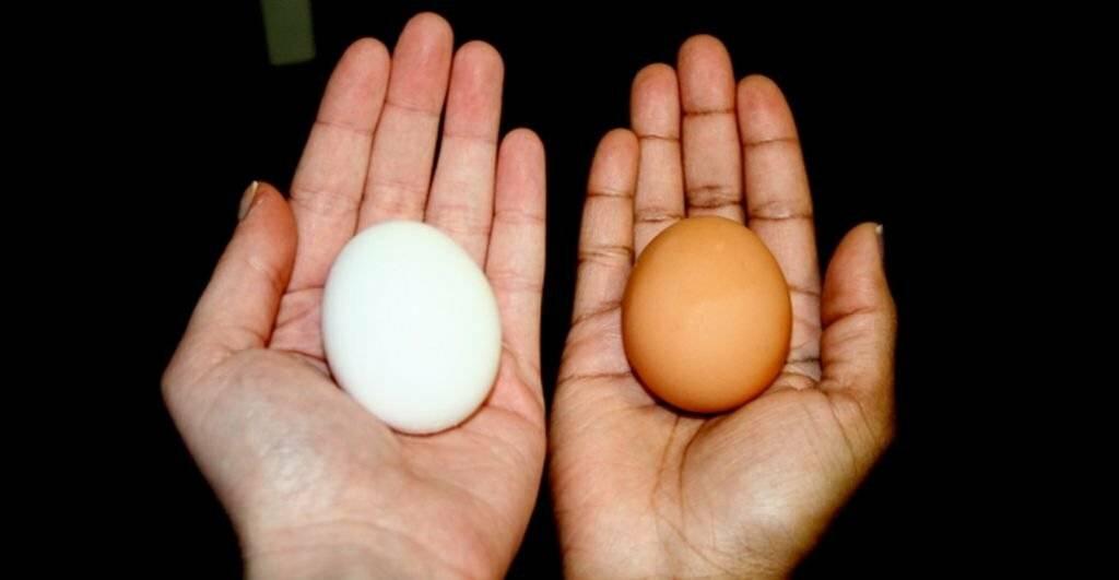 Чем белые яйца отличаются от коричневых