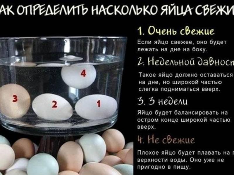 Перепелиные яйца свежие как проверить