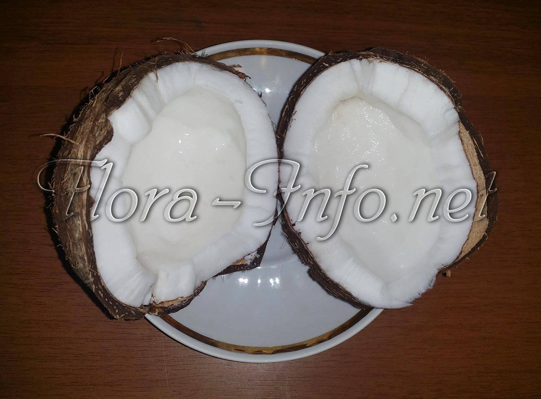 Кокосовый орех или кокос: полезен или вреден? калорийность, польза и вред кокоса, и его влияние на здоровье детей и взрослых.
