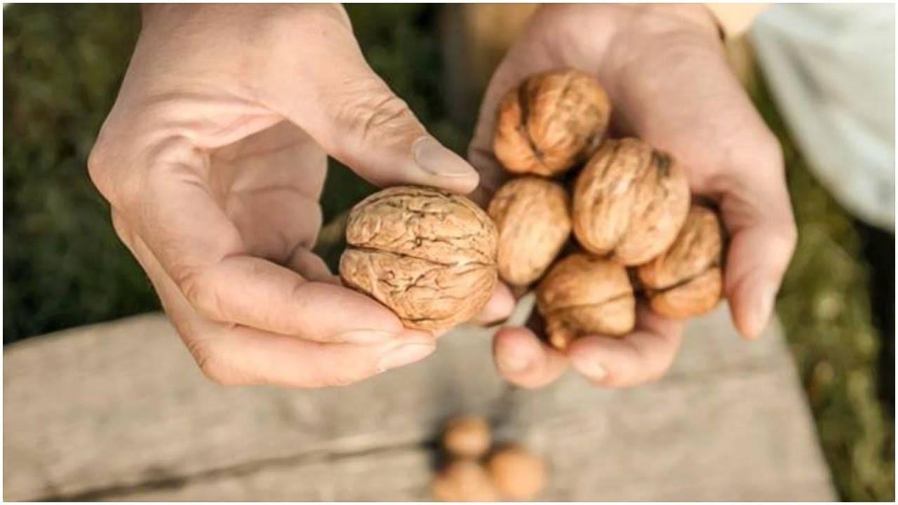 Польза орехов для организма мужчины