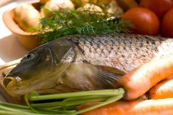 Польза сазана, вред, показания и противопоказания к применению мяса рыбы (115 фото и видео)