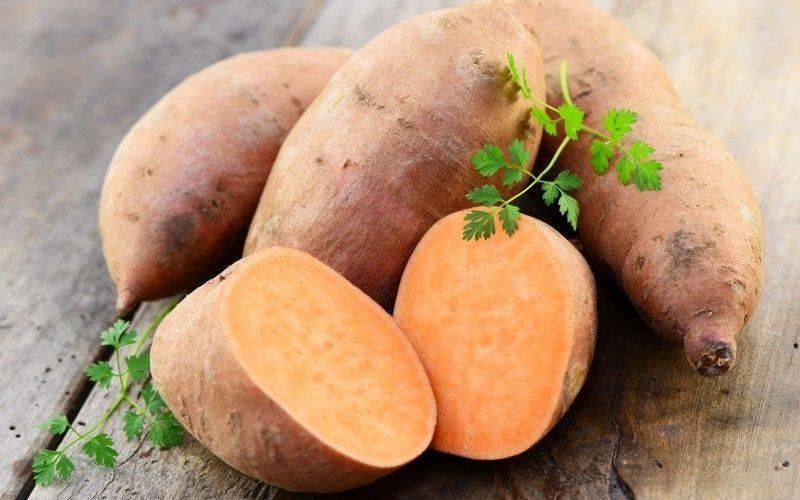 Чудо-овощ американских индейцев — батат: его польза и вред для здоровья